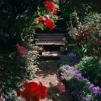 Established country garden in south London